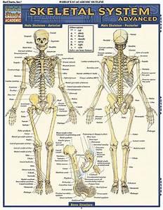 Skeletal System Advanced