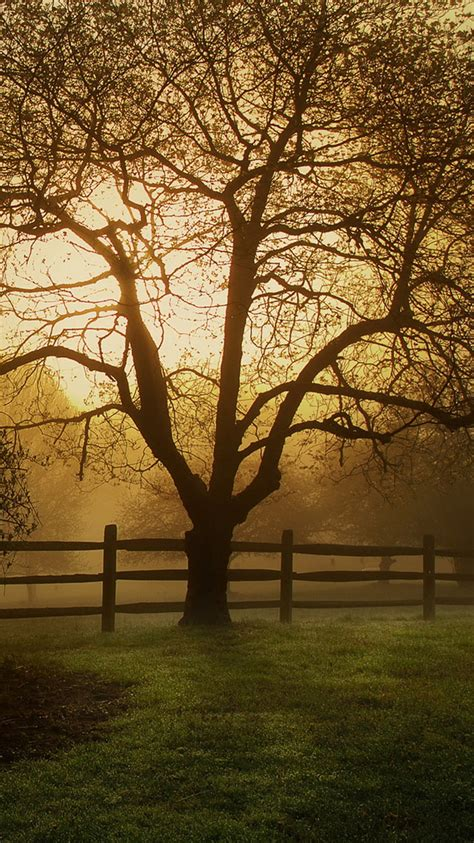 countryside  farm tree iphone  wallpaper hd