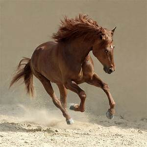 Top 19 Photos Of Arabian Horses | MostBeautifulThings