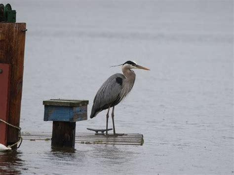 lake ontario water levels  highest   years damage