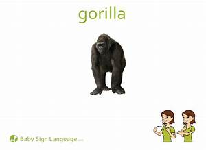 Gorilla Size Chart Gorilla