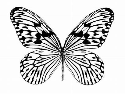 Butterfly Coloring Drawing Realistic Pages