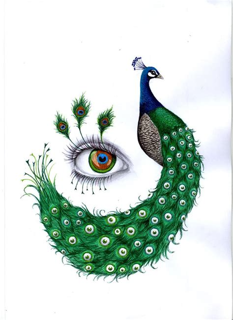 peacock  lachauvesourisdoree illustration peacocks