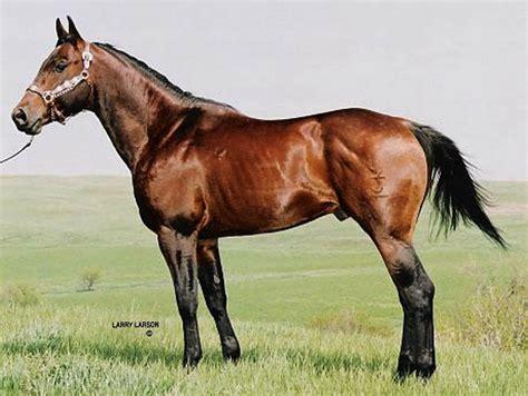 horse horses quarter stallion stallions fast racing slow twin jk doc stud raise barrel bruce due starting roping tsln raises