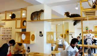 cat cafe trying to launch cat cafe 365 things to do in