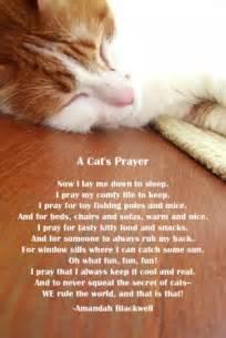 cat grief cat grieving quotes quotesgram