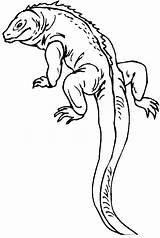 Lizard Coloring Printable Tail Reptile Outline Colouring Gecko Salamander Drawing Realistic Animal Reptiles Lizards Monitor Fastseoguru Cartoon Getcolorings Sheets Popular sketch template