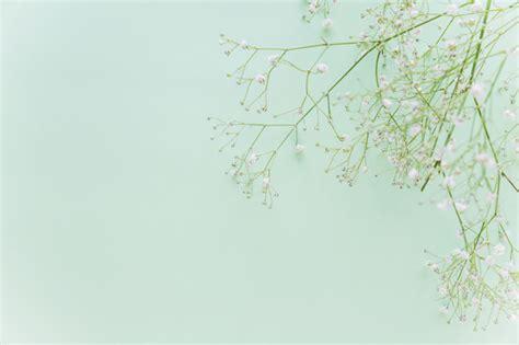 rami di fiori rami di fiori verdi sul tavolo scaricare foto gratis