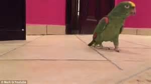 100 bodies hit the floor parrot african grey parrot