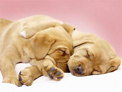 Dog Sleep Wallpapers Together Dogs Backgrounds Funny