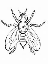 Fly Coloring Pages Fruit Firefly Guy Insect Drawing Printable Supercoloring Flies Fireflies Getdrawings Print Animals Super Insects Categories Spider Getcolorings sketch template