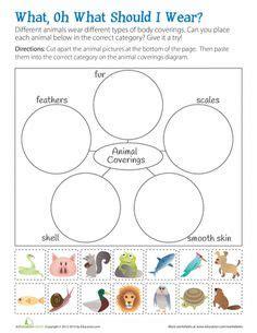 animal characteristics preschool elementary autism