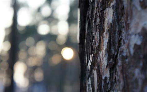 Dslr Hd Background by Jakariya Dslr Background