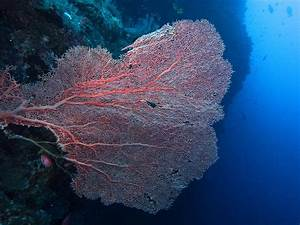 Underwater Photo Gallery: Best of Tubbataha's Coral Reefs