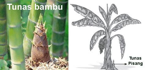perkembangbiakan tumbuhan secara vegetatif alami