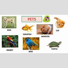 Animals Vocabulary Y1