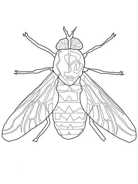 fly coloring page  kids coloring sky