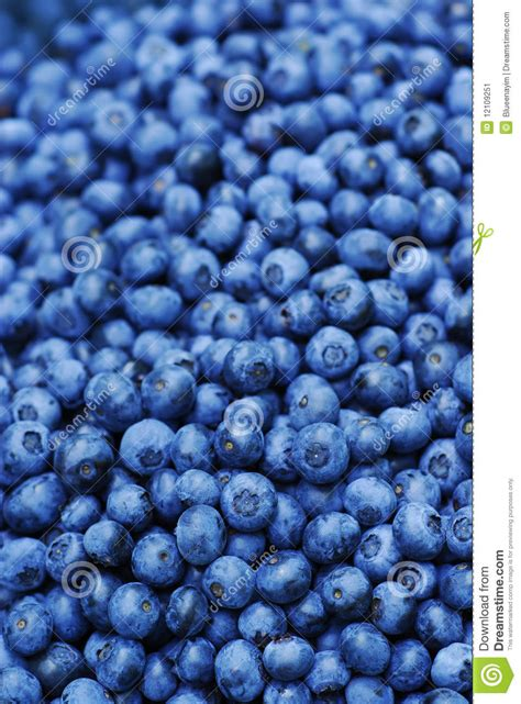 what color are blueberries blueberry background stock image image of color culinary