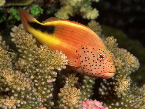 Beautiful Sea Animals Wallpapers - picturespool beautiful fishes wallpaper pictures sea