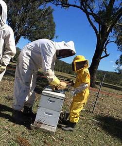 Мазь на основе пчелиного яда для суставов