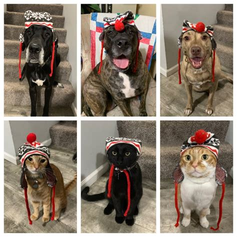 silly reddit dog imgur hats bitches boats hat cooper merry holidays happy christmas dogswearinghats