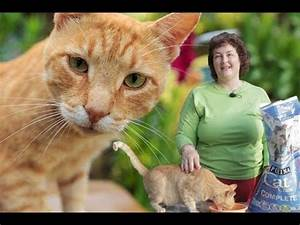Deworming Cats Naturally: Prevent Roundworms & Tapeworms ...