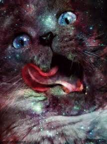 galaxy cats follow thesuperscribbler
