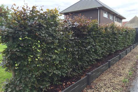 Maybe you would like to learn more about one of these? Soorten hagen: populaire haagplanten voor in de tuin & prijs