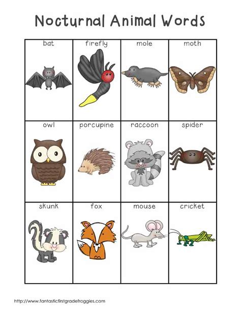 nocturnal animal words nocturnal animals writing