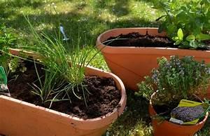 Herbes Aromatiques En Pot : faire pousser des plantes aromatiques chez soi petit guide ~ Premium-room.com Idées de Décoration