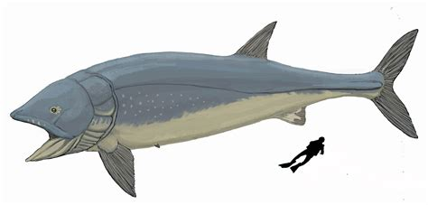 I've never seen an alpha version of this leedsichthys. 5 Prehistoric Fish They Don't Make Rods Big Enough For ...