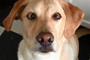 Dog Crossing Eyes on Command (Video)