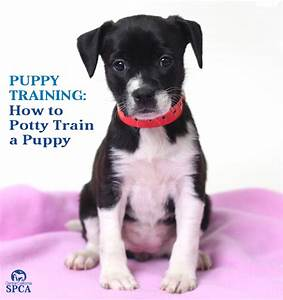 How to bathroom train a puppy 28 images training a for How to train dogs to go to the bathroom outside