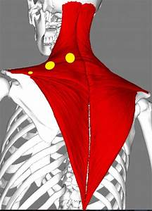 Release Tight Upper Trapezius Muscles
