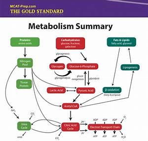 Biochemistry Macromolecules  Summary Iv