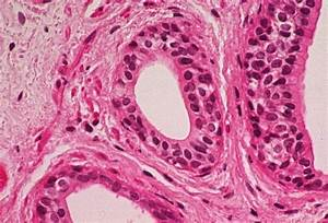 17 Best Images About Epithelial Tissue On Pinterest