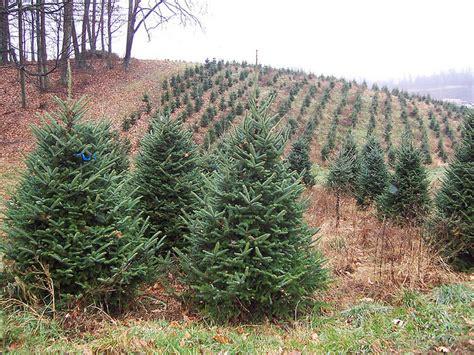 plenty of christmas trees in nj this season audio