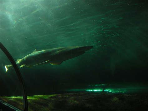 sea sydney aquarium map facts location tickets hours tour