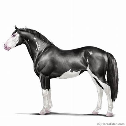 Horse Eden Irish Eee Mare Eventing Horseeden