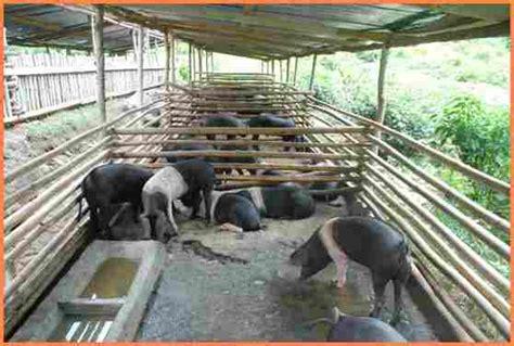 piggery farm project proposal project proposal