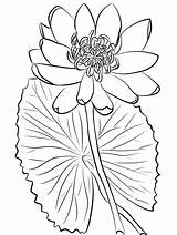 Coloring Pages Lily Water Printable Adult Onlinecoloringpages Frozen Sheets Elsa sketch template
