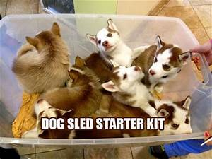Funny Pictures ... Dog Sledding Quotes