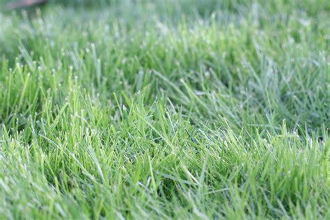Wann Rasen Das Erste Mal Mähen by Rasen M 228 Hen Nach Aussaat Wann Es F 252 R Das 1 Mal Soweit Ist