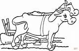 Coloring Oxen Plow Pages Drawing Beef Yoke Yoga Cattle Ox Printable Dots Dot sketch template