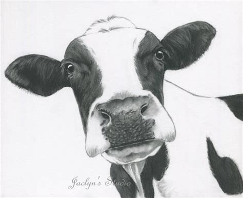 print charcoal drawing holstein