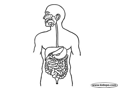 Página para colorear de sistema digestivo