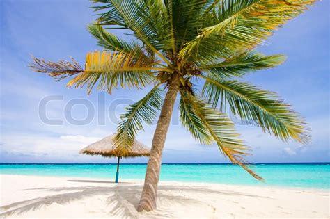 foto palme shop vidunderligt landskab med en palme og paraply stock foto colourbox