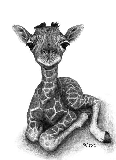 drawing   cute baby giraffe realism animal fine arts