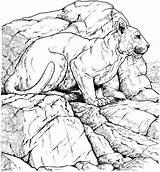 Coloring Pages Panther Panthers Printable Jaguar Florida Cougar Cat Lioness Carolina Popular Rocks Lion Coloringhome Animal Supercoloring Enregistree Depuis Wildlife sketch template
