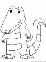 Alligators Coloring Alligator Pages Coloringpages101 sketch template